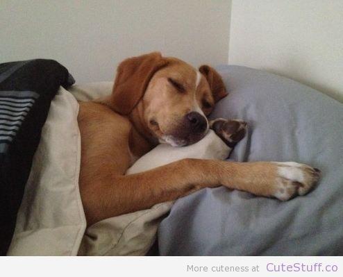 Should My Dog Sleep On My Bed