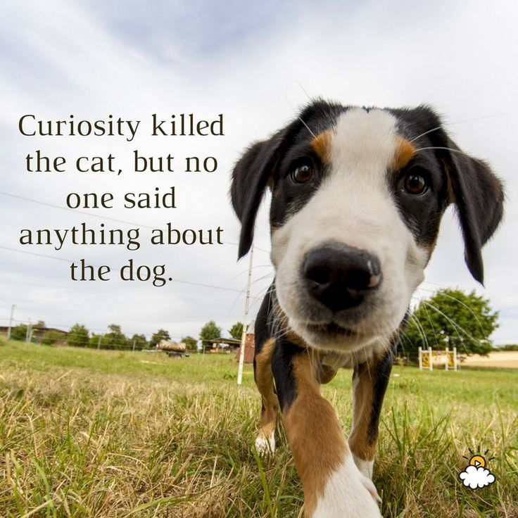 Inspirational Pet Quotes: 786 Best Inspirational Quotes Images On Pinterest