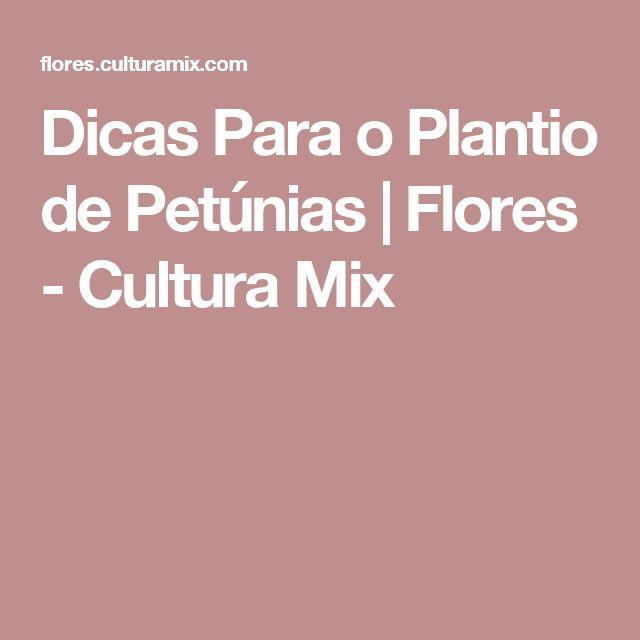 Dicas Para o Plantio de Petúnias   Flores - Cultura Mix