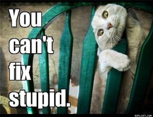 True. True.: Cats, Chair, Animals, Cant, Pet, Funny Stuff, Kitty