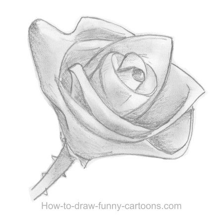 How to sketch a rose, part 10