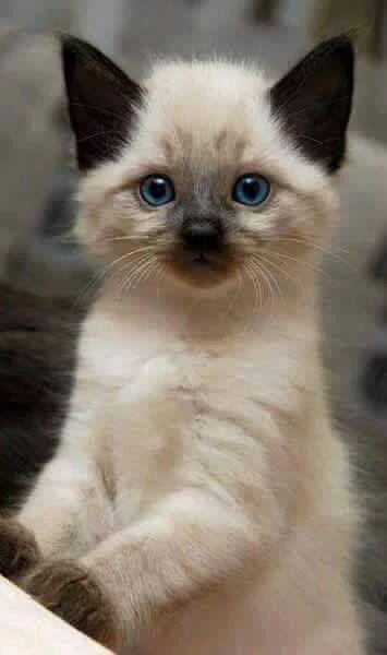 Photo - Google+ Portrait time! #Cats