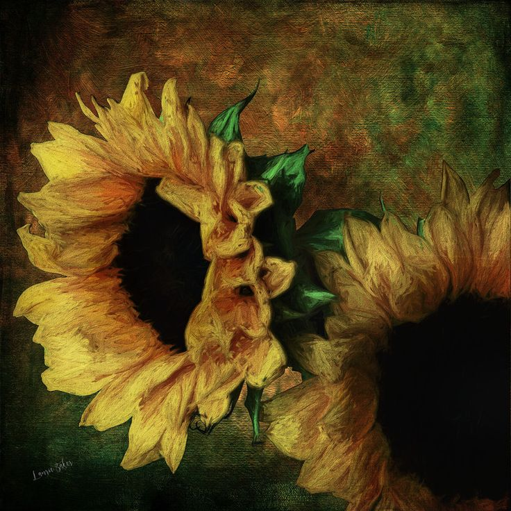 Sunflower Pair: By laurie baker
