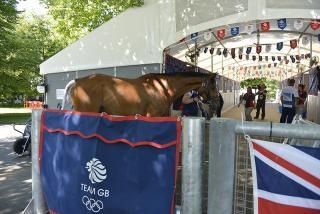 Team GB Olympic horses arriving at Greenwich