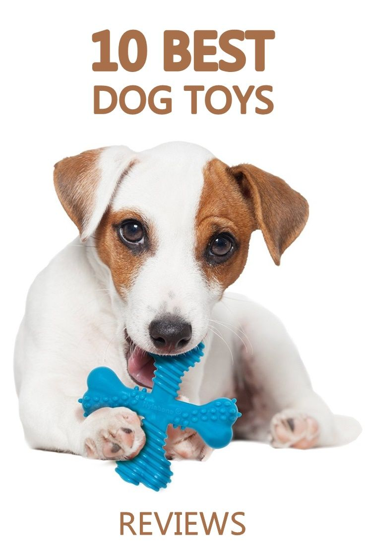 Reviews Of The Best Dog Toys To Keep Them Busy Find Out About The