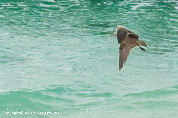 Volando sobre un mar hermoso