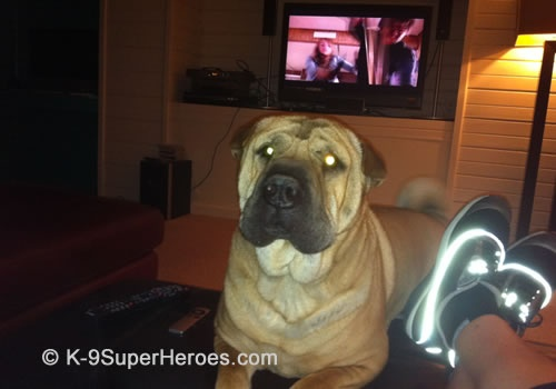 What do you mean those dogs on TV aren't real? http://www.K-9SuperHeroes.com