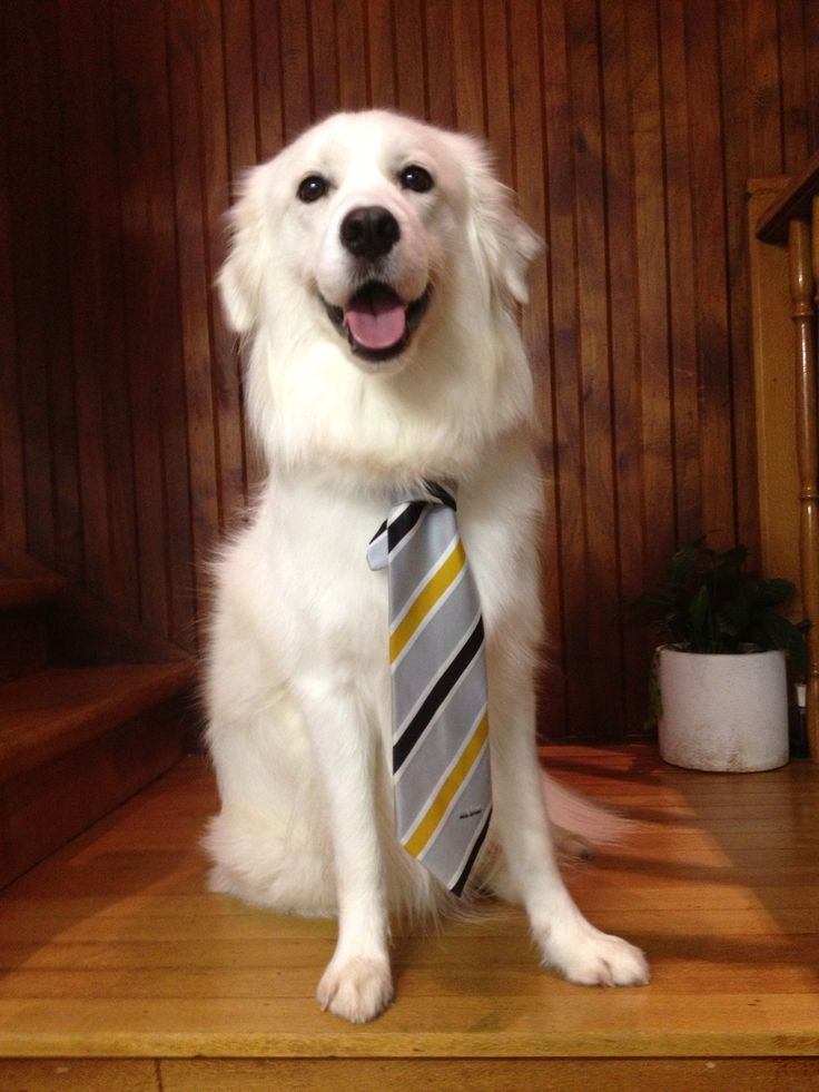 Stylish Misha sporting a Ray White tie!