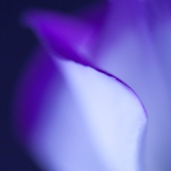 Abstract Purple Flower Print  Purple Art  by CrionnaPhotography, $25.00