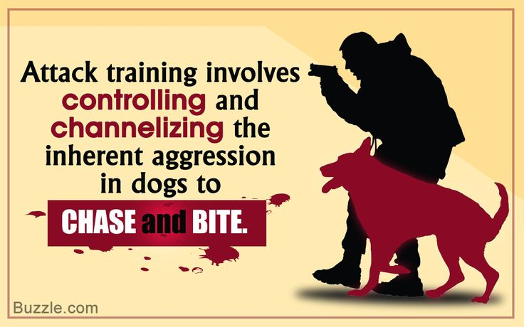 Training a police dog to attack requires controlling the aggression in them and using it to subdue the target. The method used to train police dogs for attack has been explained here.