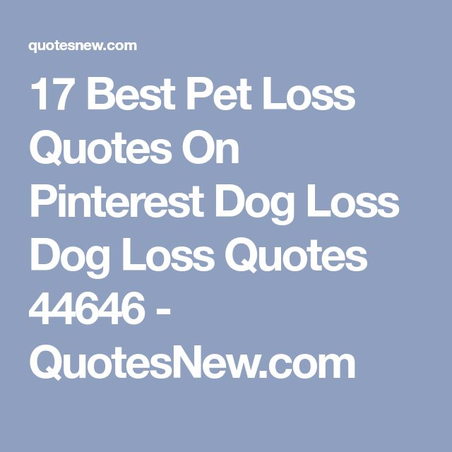 17 Best Pet Loss Quotes On Pinterest Dog Loss Dog Loss Quotes 44646 - QuotesNew.com