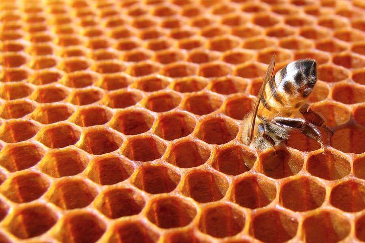 #Miele: il cibo degli dei. I segreti di un'arte antica, dove le #api lavorano in simbiosi con l'uomo. #bioeticonet