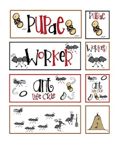 37 best images about science animal life cycles on pinterest crafts activities and student. Black Bedroom Furniture Sets. Home Design Ideas