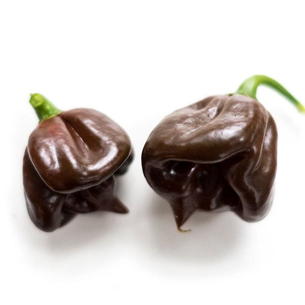 Black Stinger, Hot Pepper Seeds (Capsicum chinense) Superhot, An uncommon variety. !