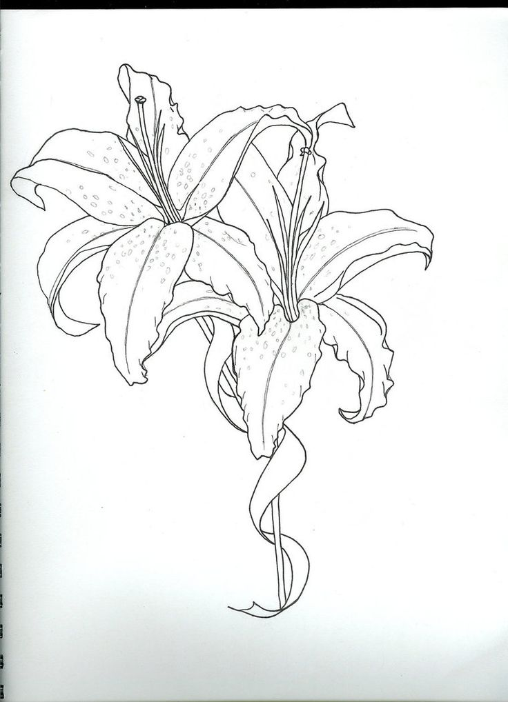 star lily tattoo sketch by ~Kiri-n on deviantART
