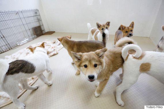 「すべての犬たちの命を救い、輝かせてあげたい」殺処分を免れた子犬が、救助犬として活躍するまで