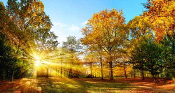 Fall begins today (at 10:21 a.m. EDT) with the arrival of the Autumnal Equinox. But what does that mean, exactly? That the leaves are falling and we should get out the rakes? haha. Farmers' Almanac gives you the nitty gritty on the beauty of Fall. #FirstDayOfFall
