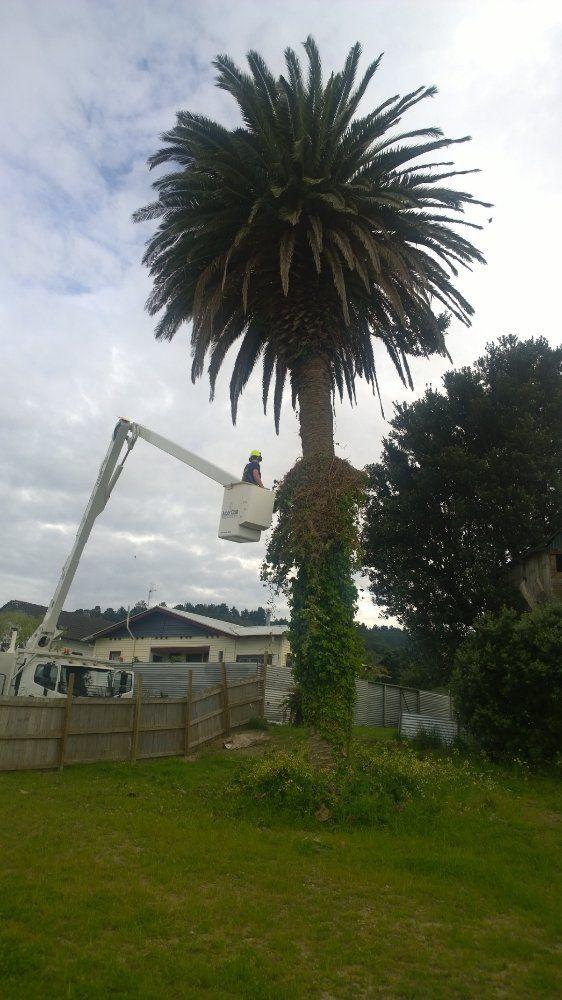 Renovation works www.onefyfe.co.nz #WaihiBeach #Bach