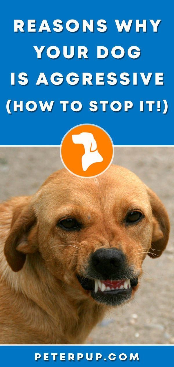 How To Stop Dog Aggression Aggressive Dog Dog Training