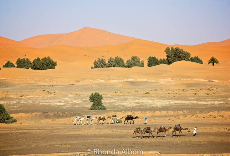 Classic image of the camels with the colors of the Sahara in the background