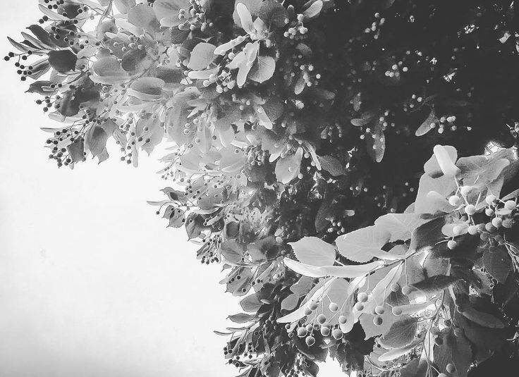 'Tell me important things under skies and trees and I'll soak them in. I'll remember.' ~Victoria Erickson ______________________________ Barbara Etcetera Storyteller in Woord & Beeld ______________________________  @victoriaericksonwriter #storytelling #love #importantthings #skies #trees #remember #poetry #victoriaerickson