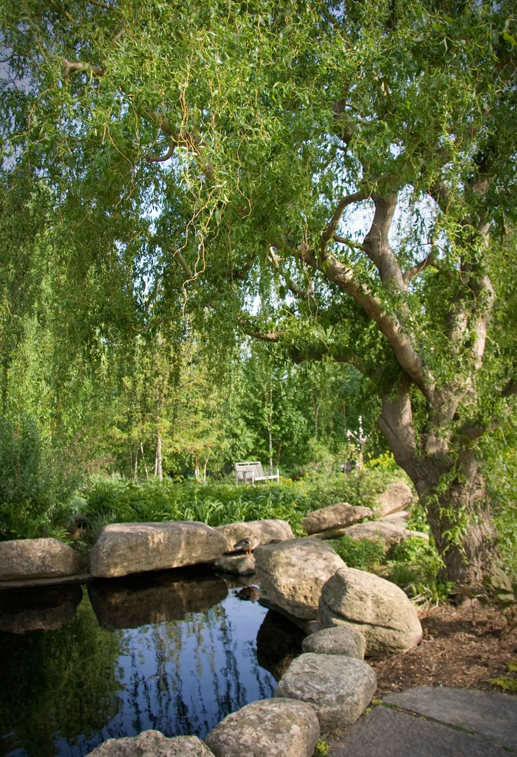 82 best Willow trees images on Pinterest | Japanese gardens, Weeping ...