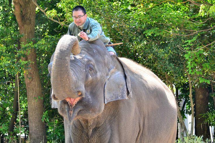 【ラオス】ラオスで象使いの国家資格を取得!少数民族、川下り 、ショートトリップも! - トリッピース