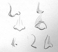 dibujar narices paso a paso - Buscar con Google
