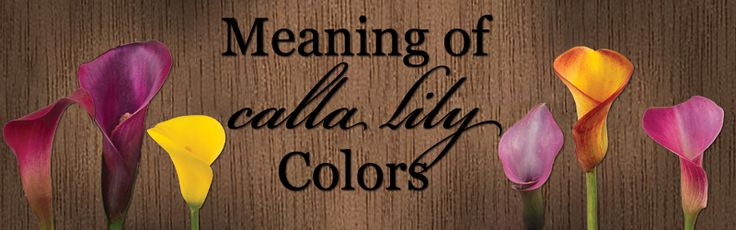 Meaning of Calla Lily Colors from CalCallas.com - the calla lily experts!