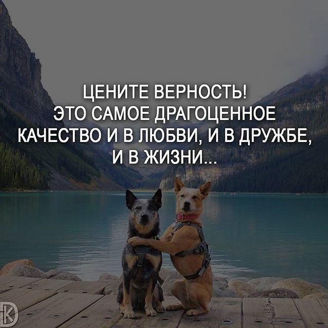 #мотивация #цитаты #мысли #любовь #счастье #жизнь #саморазвитие #мудрость #мотивациянакаждыйдень #цитатывеликихженщин #мыслинаночь #верность #цитатыумныхлюдей #совет #deng1vkarmane