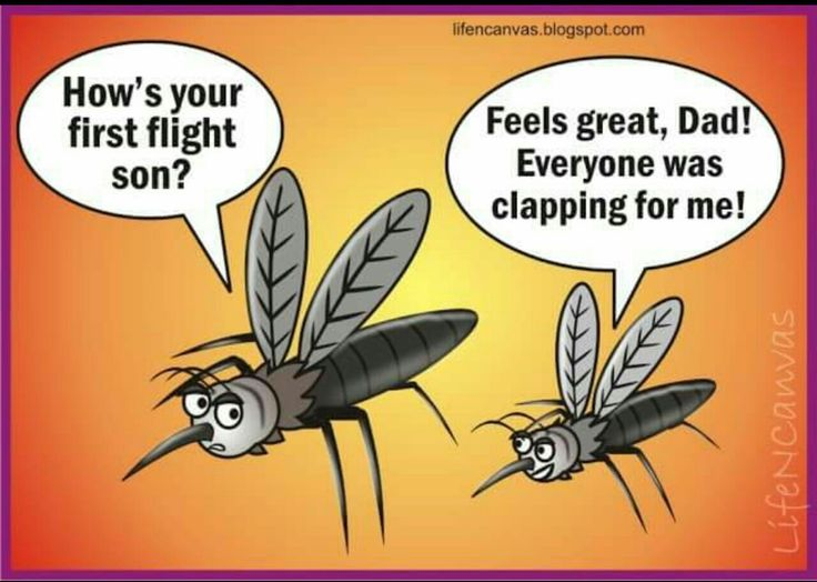 1000+ images about Mosquito Quotes & Humor on Pinterest ...