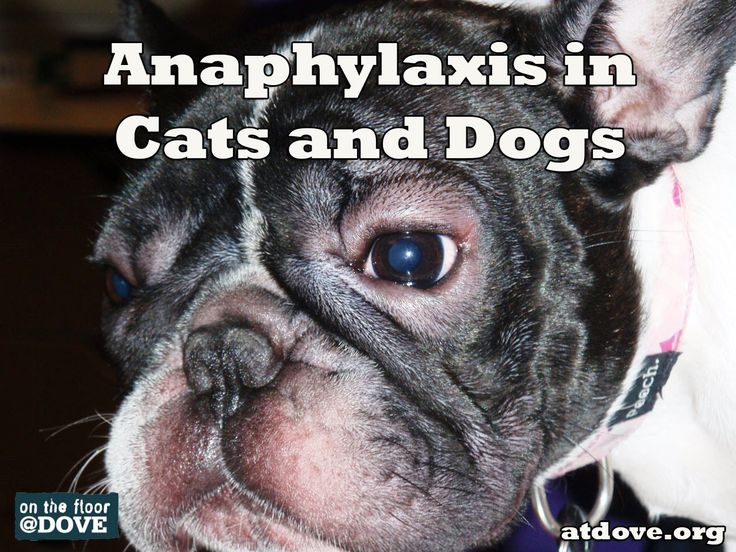 Treating Anaphylaxis In Dogs