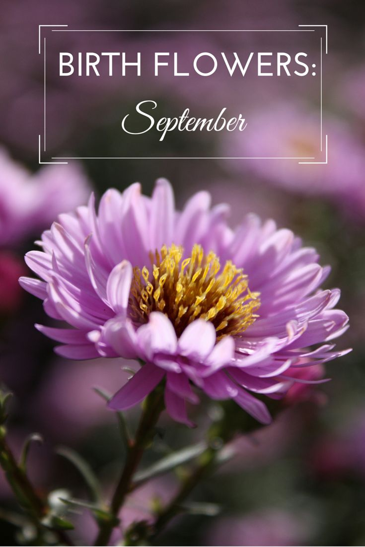 Best 25 birthday month flowers ideas on pinterest month flowers birth flowers september dhlflorist Gallery