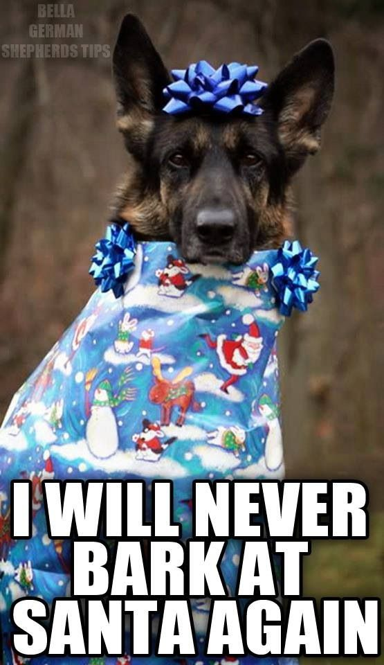 bahahaha. Cute #German #Shepherd. I THOUGHT HE WAS TRYING TO TAKE,THE GIFTS:(:(:(