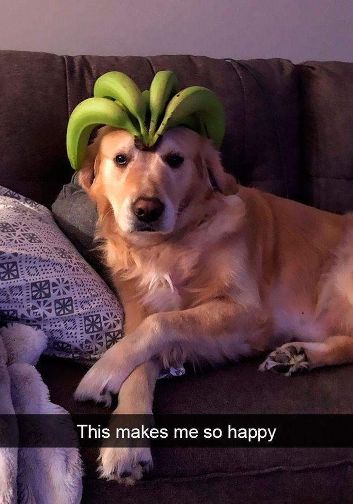 Funny Snapchats Dog Photo – 190 Pics