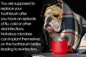 You are supposed to replace your toothbrush after you have an episode of flu, cold or other viral infections. Notorious microbes can implant themselves on the toothbrush bristles leading to re-infection.  Dentaltown - Patient Education Ideas