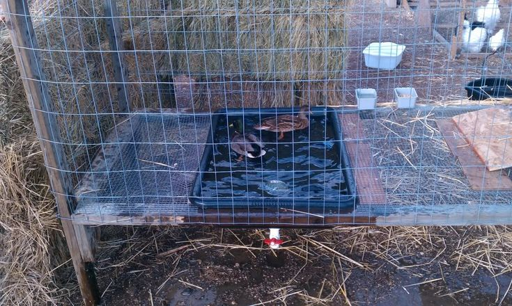 1000 ideas about duck pens on pinterest duck house for How to build a duck pen