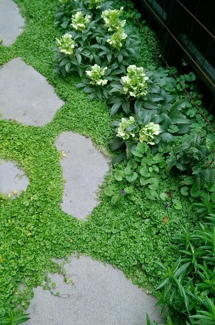 17 best images about ground covers on pinterest sun for Best low growing groundcover for full sun