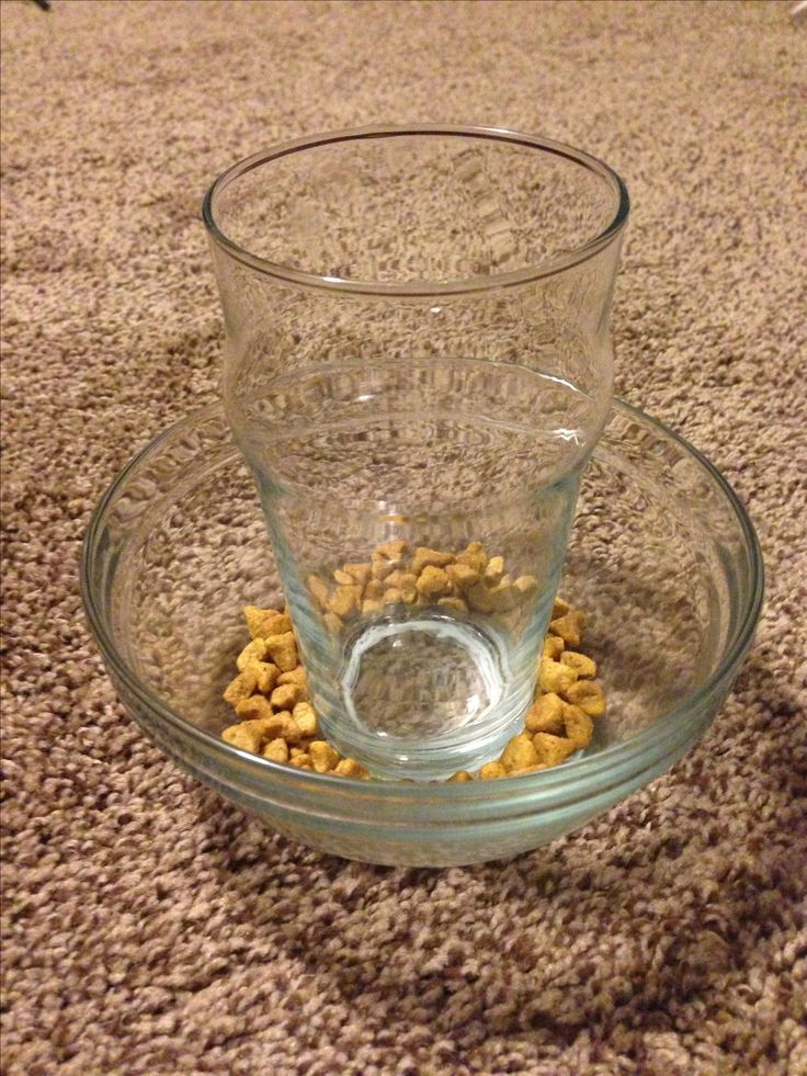 DIY slow cat feeder2! Buy a small bowl and glass from