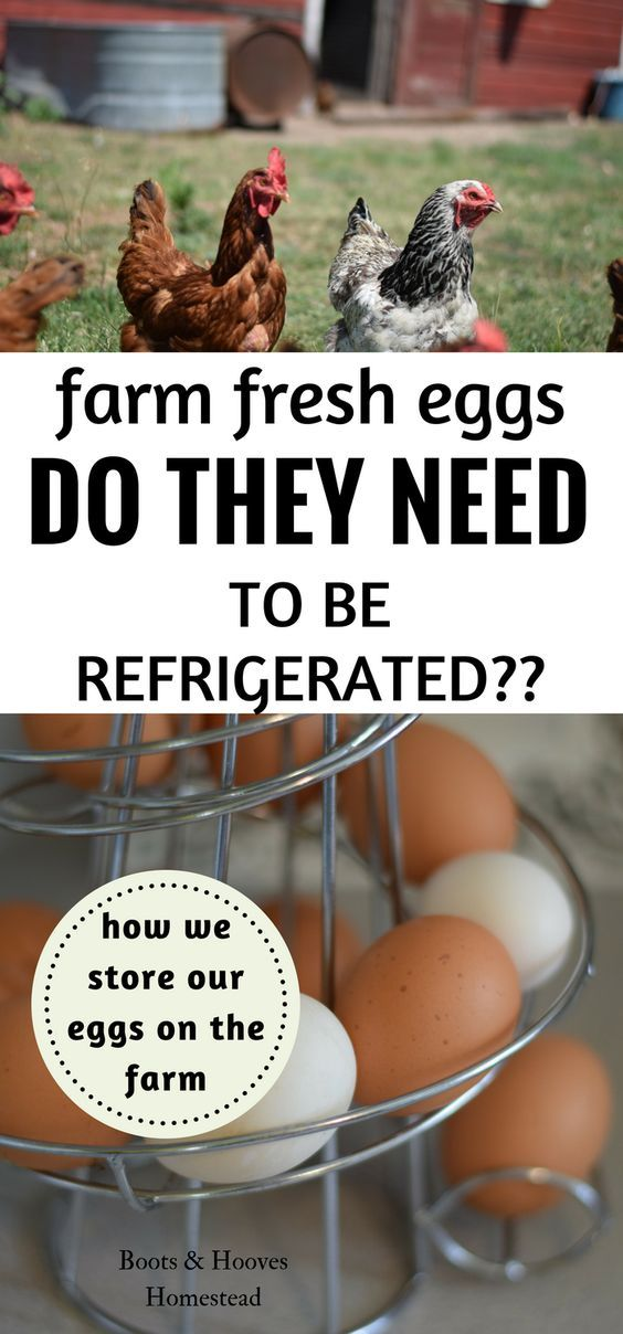 Do you need to refrigerate your eggs? The short answer is sometimes yes and sometimes no. And I'll explain why you do and don't need to refrigerate your eggs.
