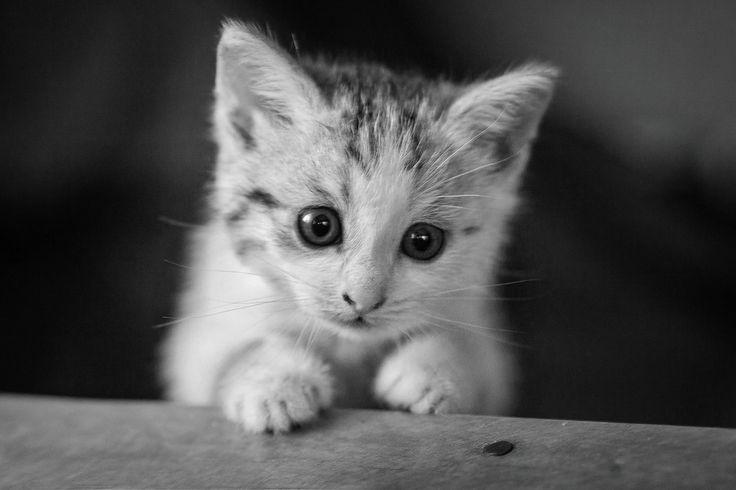 Угрюмый Котик!) - null