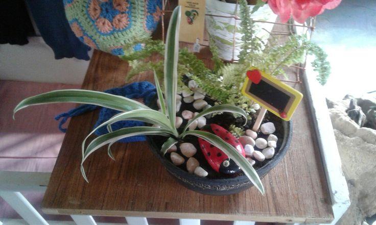 Tokreen bowl with plants and lovebug pebble