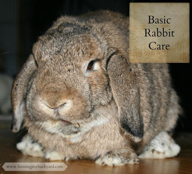 basic rabbit care here s what you need to do backyards