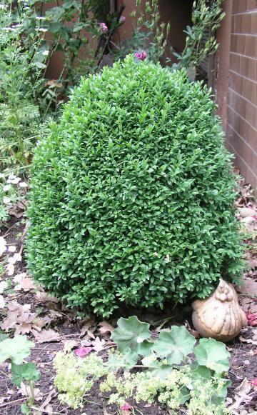 110 besten Garten Gräser und Pflanzenpflege Bilder auf Pinterest - abo mein schoner garten