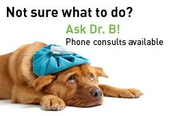 homeopathic vet - lots of good stuff on home remedies for pets