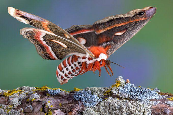 symbolic moth meaning