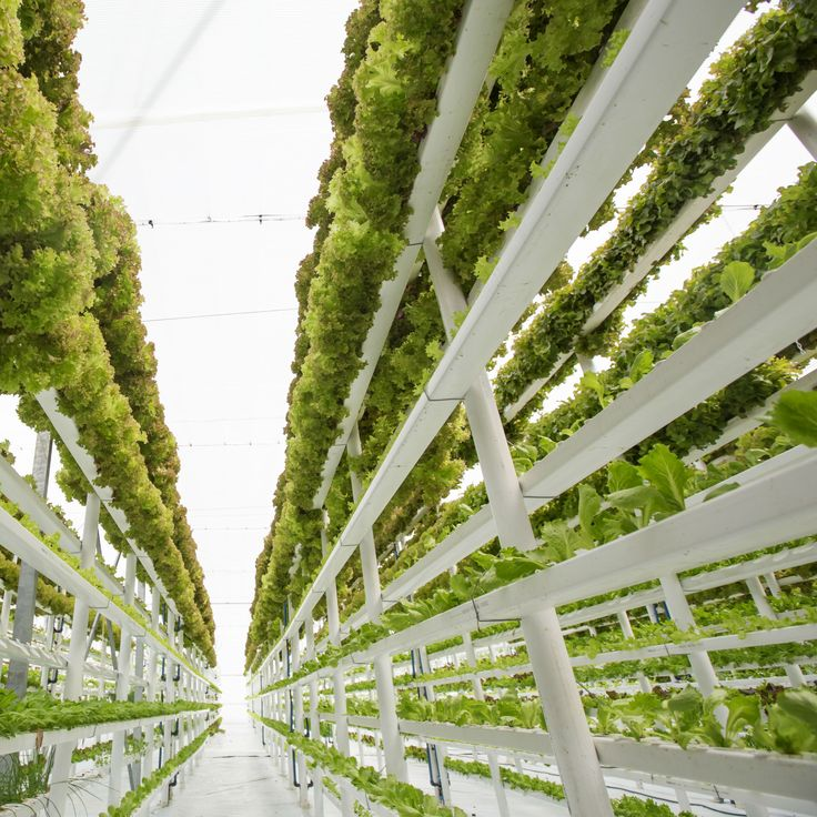All about Vertical Farming Modern agriculture (mit