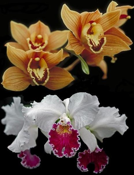 Orchids from Colombia,   one of their top exports.