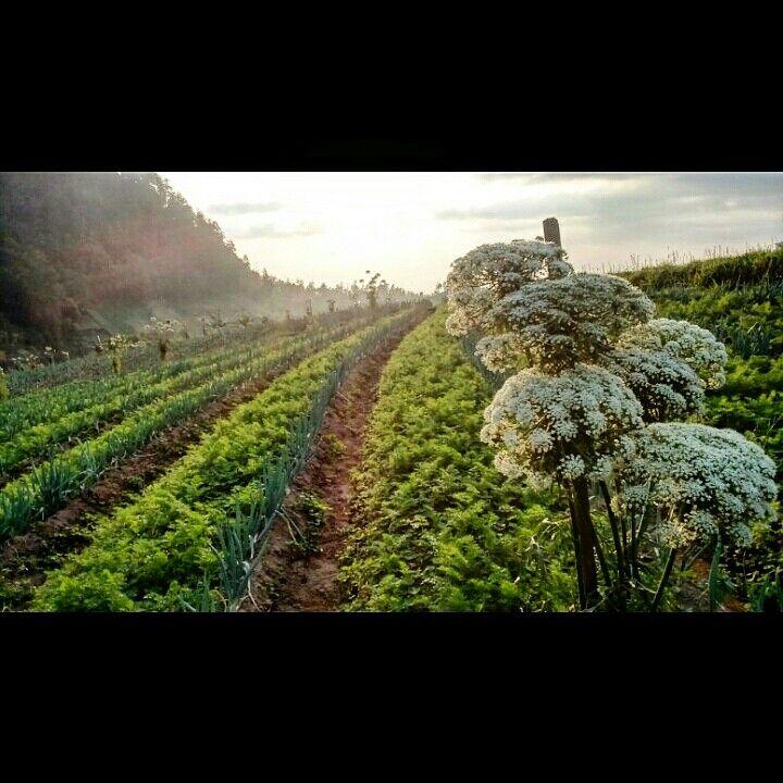 #field #flower