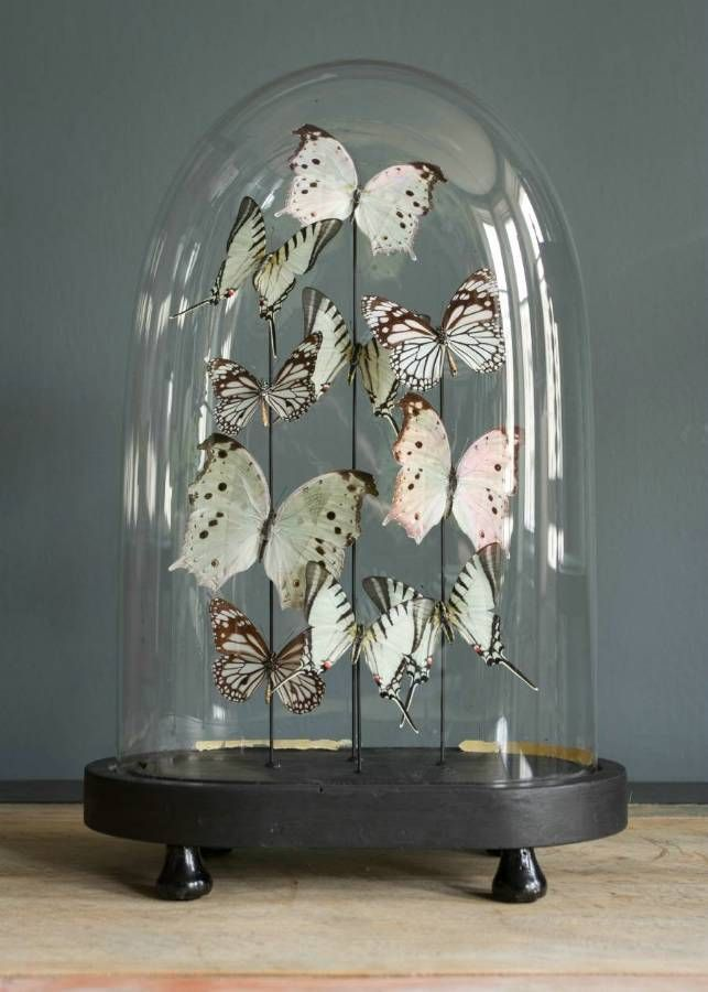 Assorted white butterfly dome